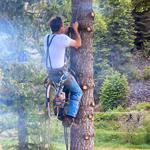 Élagage d'arbre - élagage Lévis et québec | Katra Inc